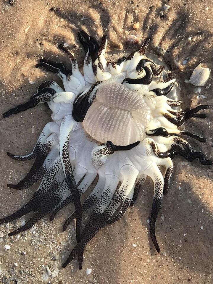criatura-extraterrestre-playa-australia