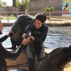 Un joven pide matrimonio a su novia con la ayuda de los leones marinos de Terra Natura