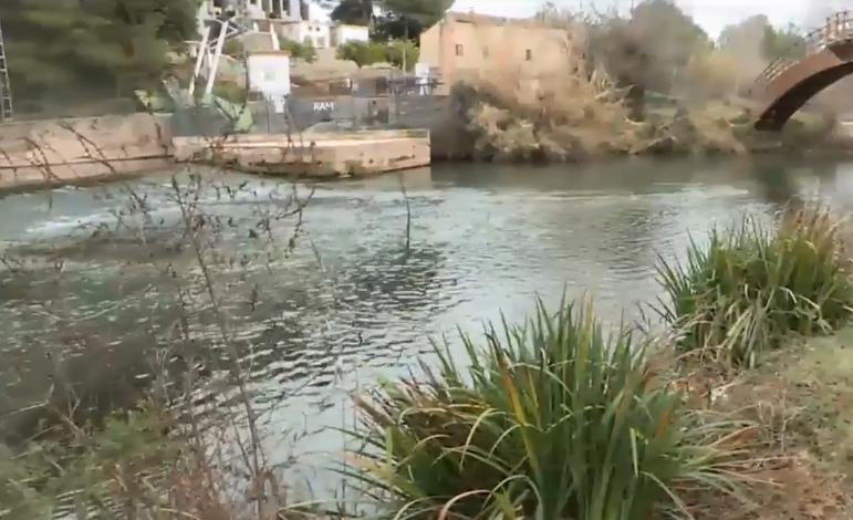 À Punt VÍDEO Les llúdries arriben a l àrea metropolitana de València