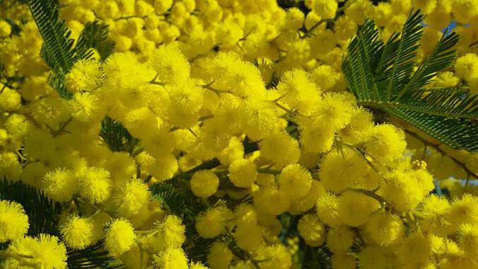 El-aumento-de-insectos-herbivoros-en-plantas-invasoras-aviva-las-plagas_image_380