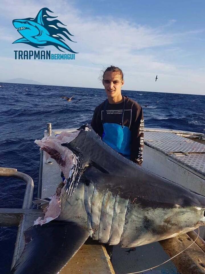 enorme-tiburon-cabeza-mordida-australia