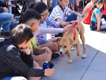 Desfile de perros abandonados. Foto: E. García