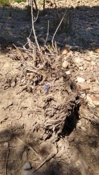 basuraleza 34 espacios naturales de la Comunidad Valenciana (71)