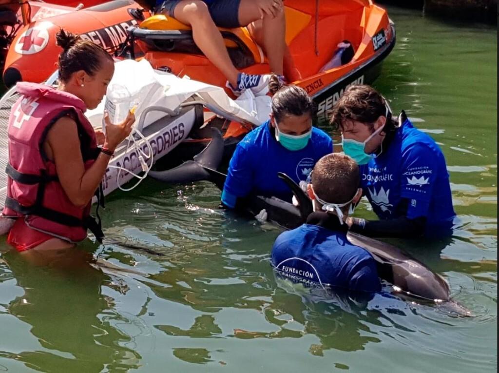 delfin-enfermo_10309685_20190801170724