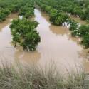 Asociaciones de agricultores cifran entre 100 y 200 millones de euros los daños por la gota fría en los cultivos