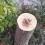 Valencia pierde más de 4.500 árboles en un año
