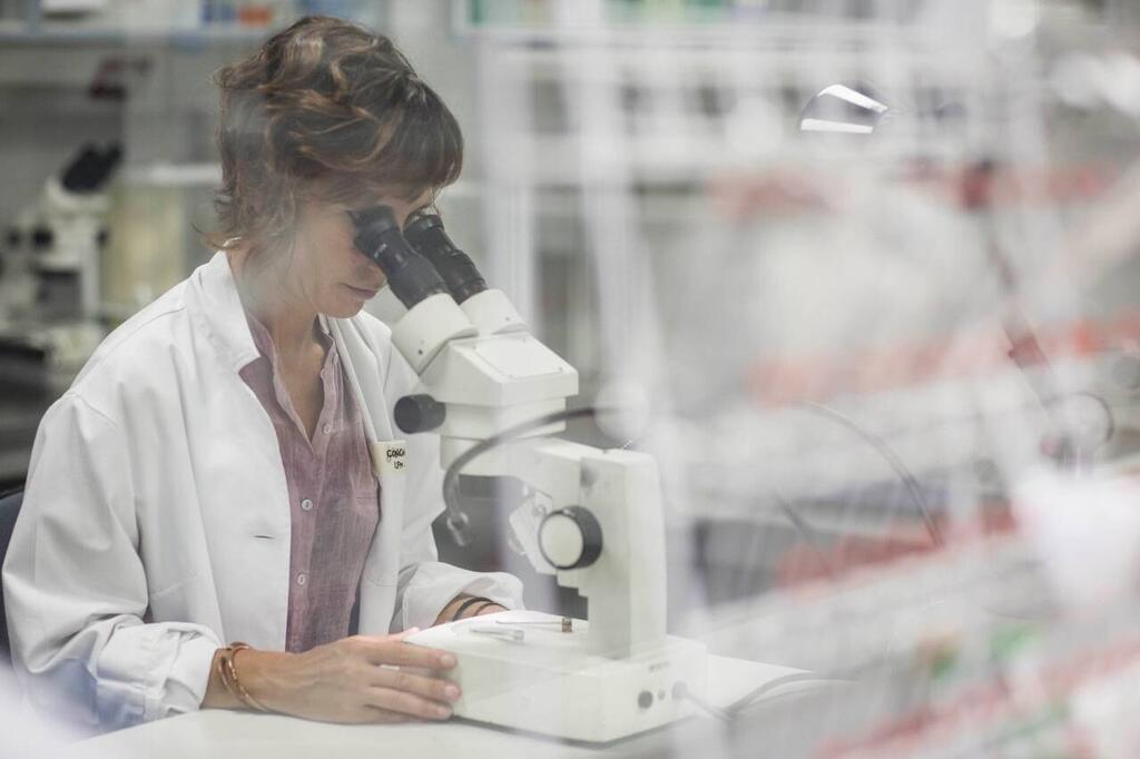 Investigadoras-espanolas-estudian-que-pasa-si-el-coronavirus-se-junta-con-el-parasito-de-la-malaria