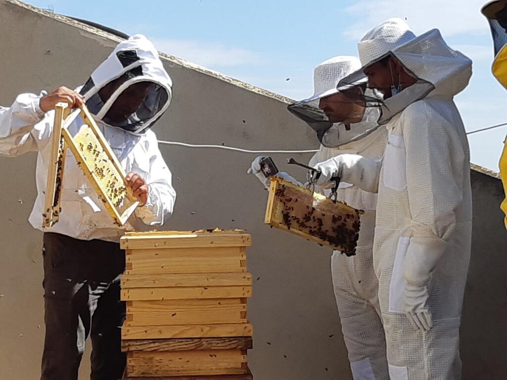 0611 Campillo i Ramon visita ruscos abelles