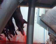 foto matadero Collado Villalba-ёEqualia