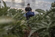 huerta campo agricultura